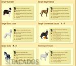 dogzer races chiens